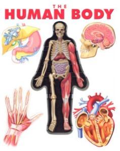 5c686-humanbody-bmp